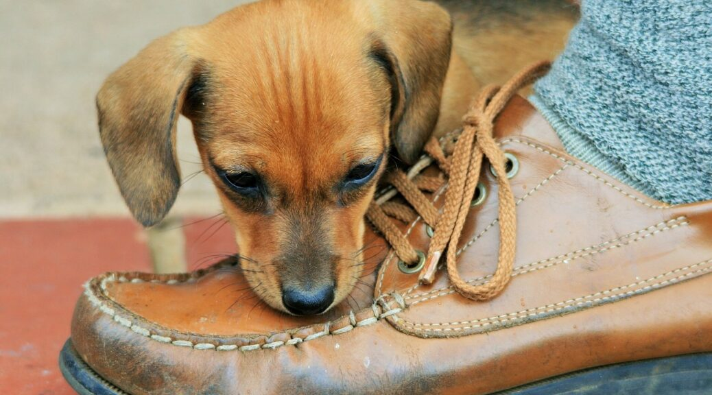 Puppy with Brown Shoe